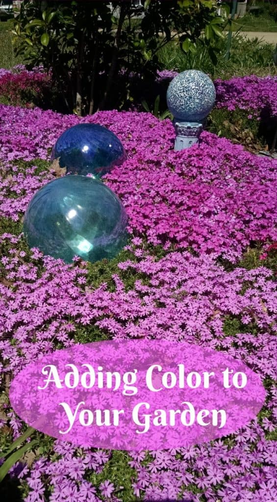 Add color to your garden, Creeping Phlox, Planting in Mass