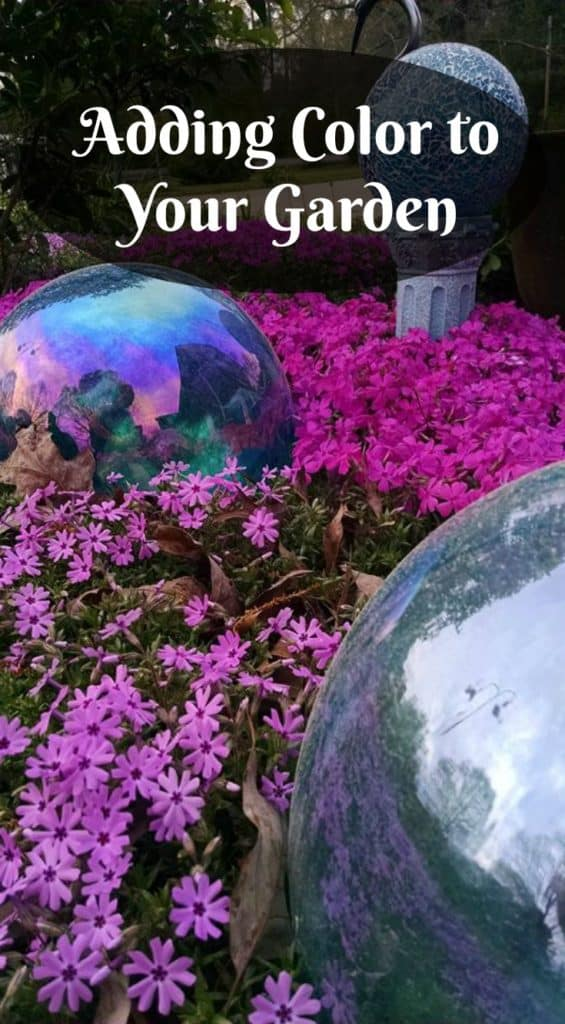 Creeping Phlox, Pink Flowers, Ground Cover Flowers, Adding color to your garden
