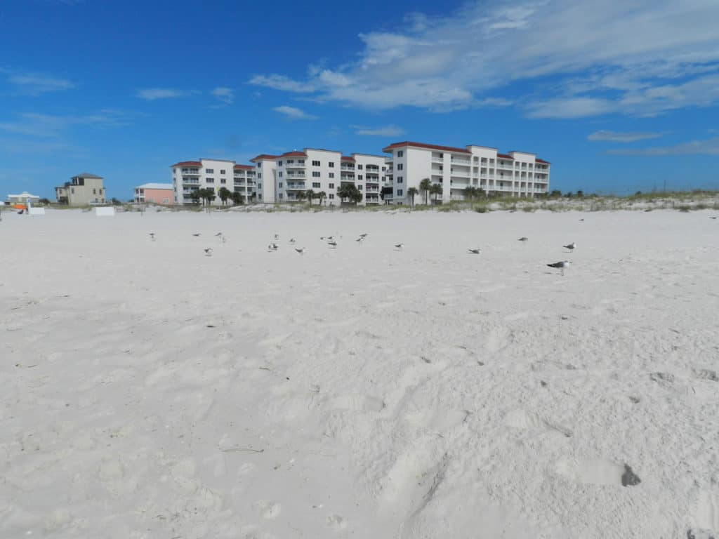 The white sand of the beaches in Alabama!