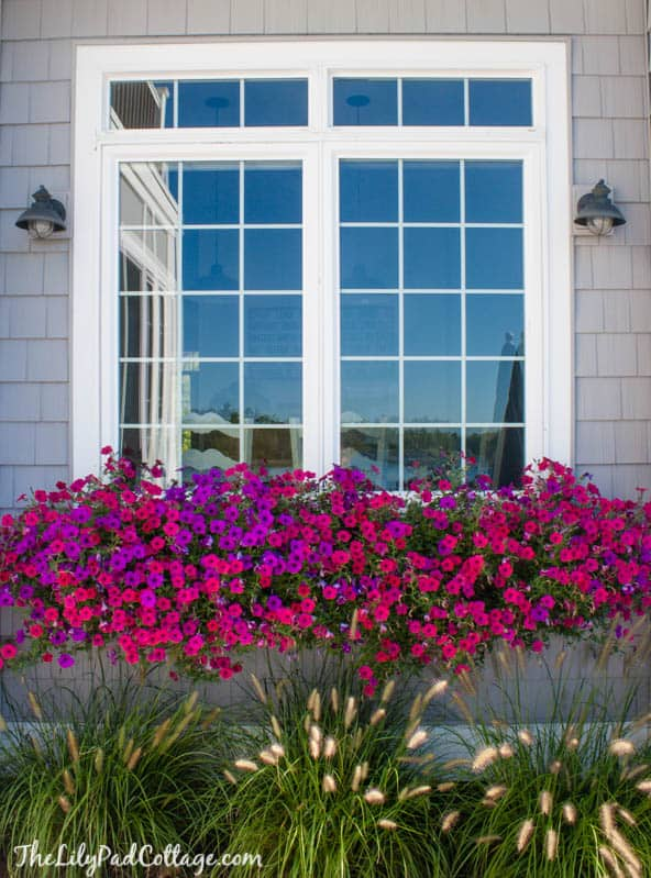 window boxes, container gardening