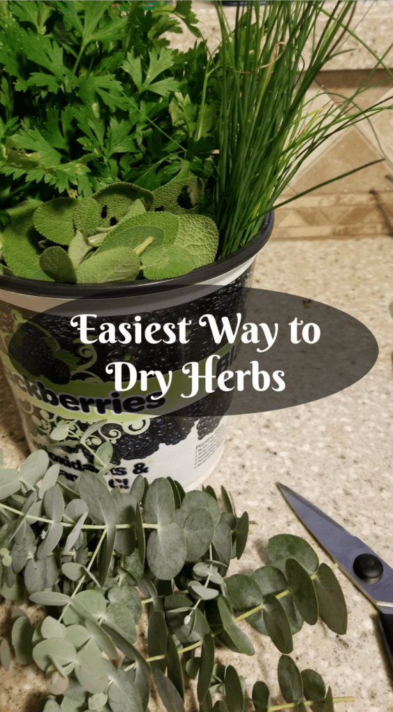 Easiest Way to Dry Herbs, Bucket of Sage, Chives, Parsley sitting on counter with scissors and eucalyptus