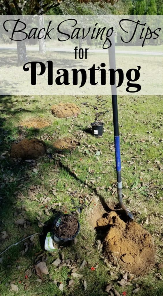 BAck Saving Tips for Planting, Best Time for Planting