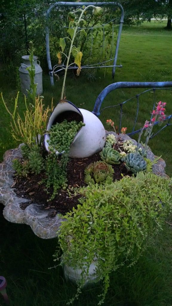Trailing succulents in recycled Birdbath planter