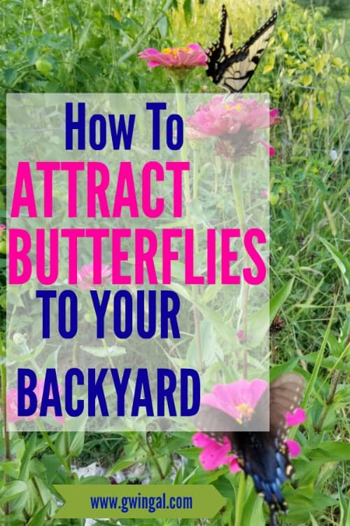 How to Attract Butterflies to your Backyard