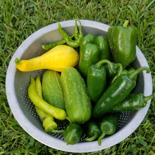 Super Simple Garden Produce Recipes