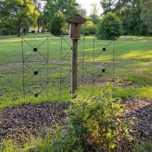 Green Roof Birdhouse flanked by 2 black trellis
