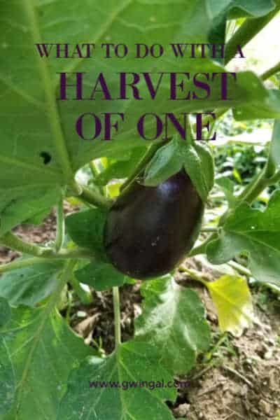 Plant with one purple eggplant growing