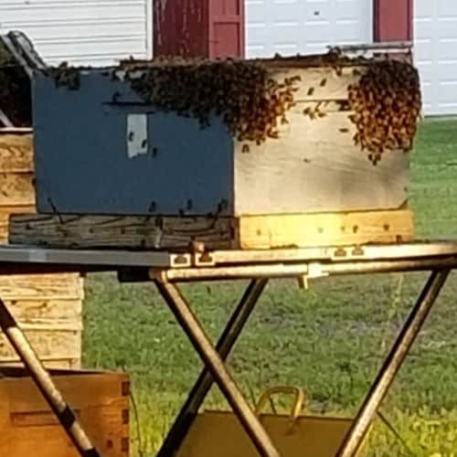 Honey Bees on sides of wood hive
