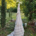 bed sheet wrapping a plant in a tee pee shape